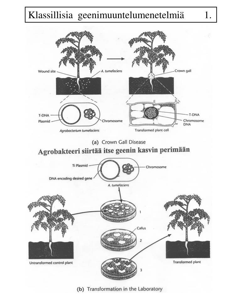 Klassillisia  geenimuuntelumenetelmiä        1.