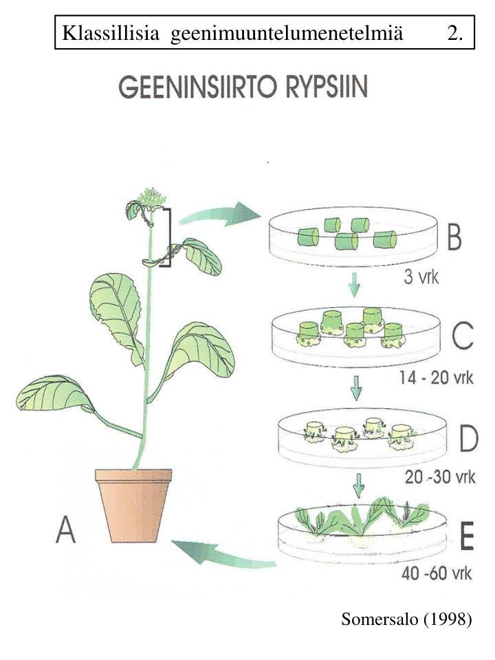 Klassillisia  geenimuuntelumenetelmiä        2.
