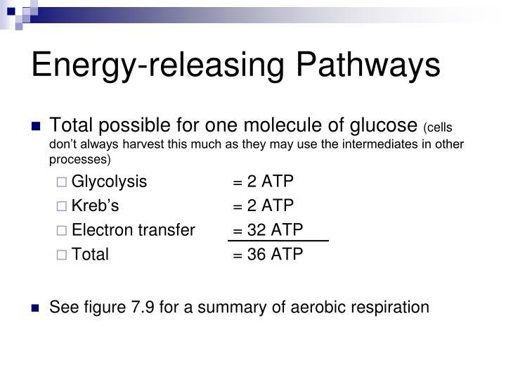 Energy-releasing Pathways