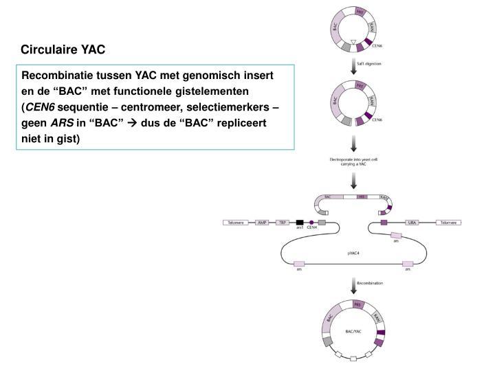 Circulaire YAC