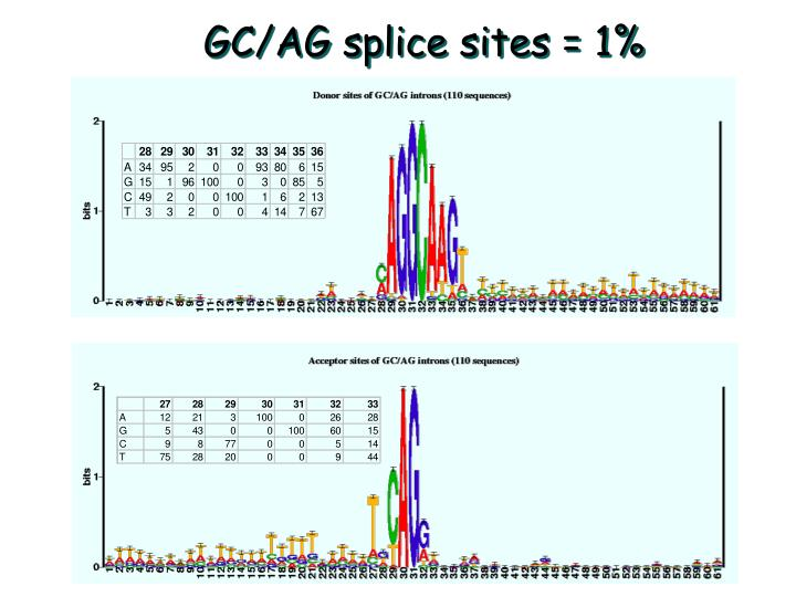 GC/AG splice sites = 1%