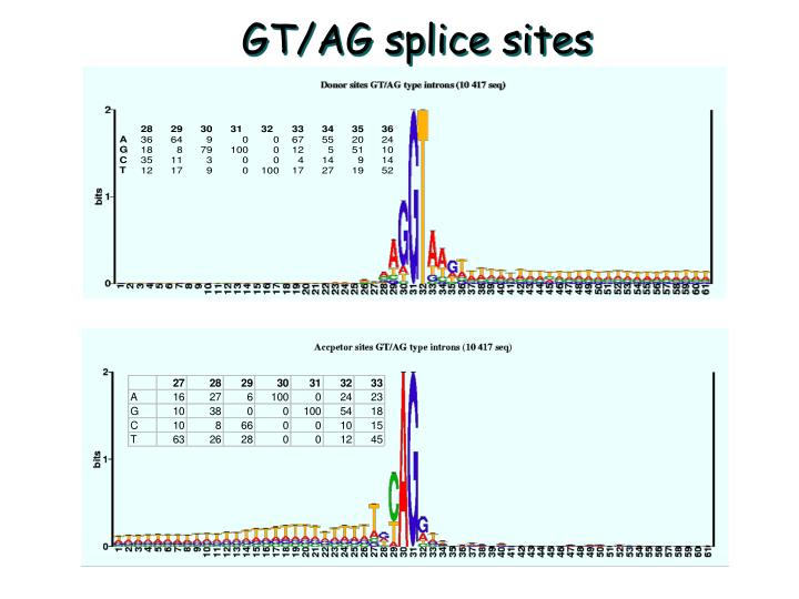 GT/AG splice sites