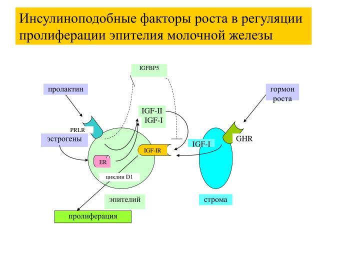 IGFBP5