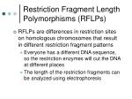 restriction fragment length polymorphisms rflps