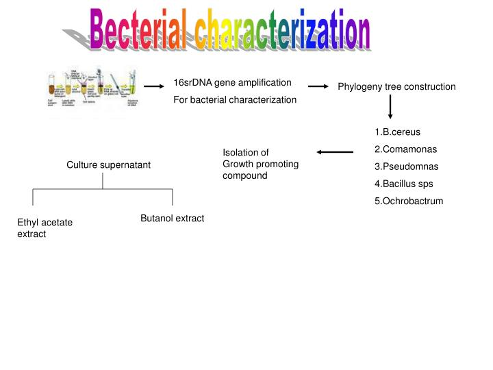 Becterial characterization