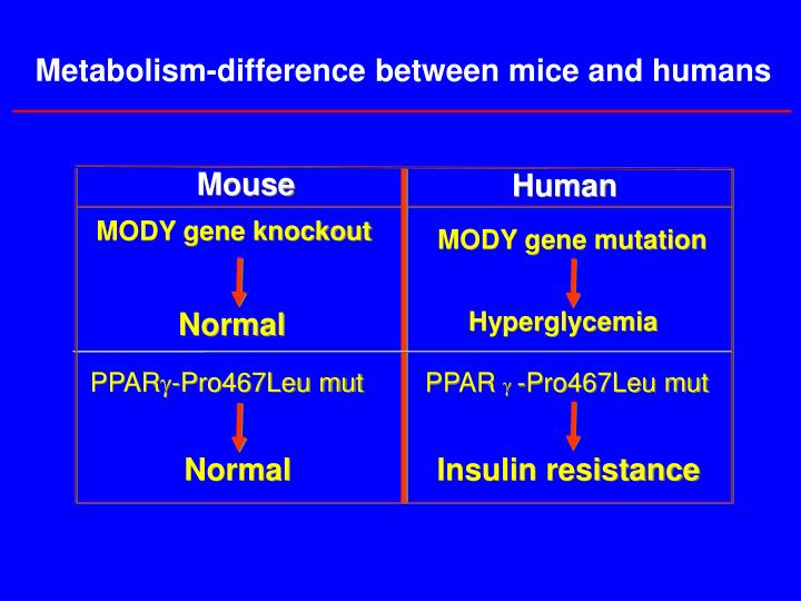 Metabolism-difference between mice and humans