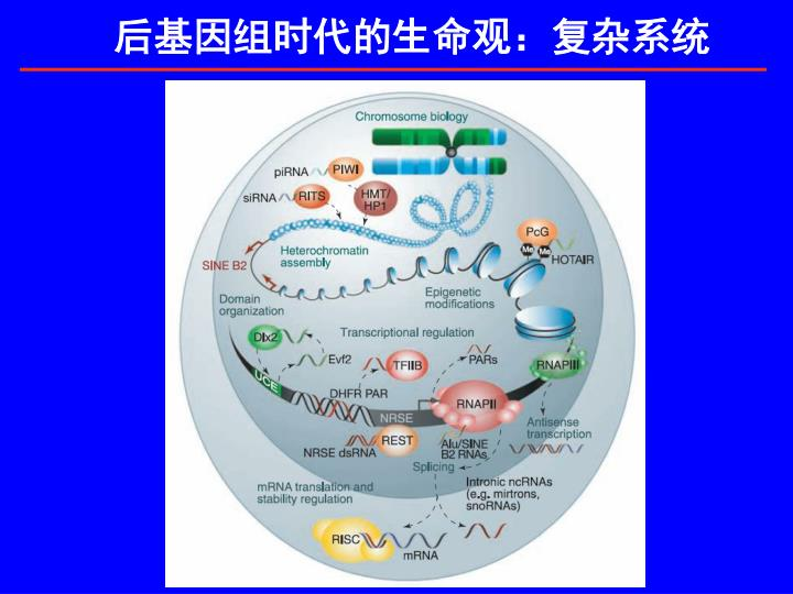 后基因组时代的生命观:复杂系统