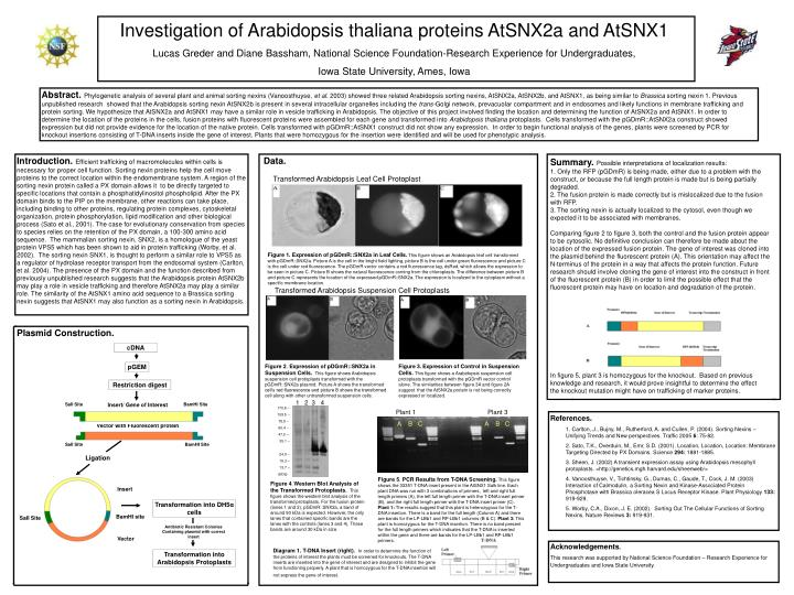 Investigation of Arabidopsis thaliana proteins AtSNX2a and AtSNX1