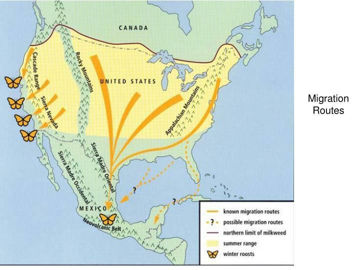 Migration Routes