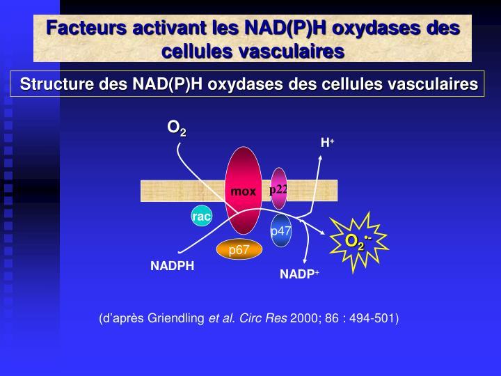 Facteurs activant les NAD(P)H oxydases des cellules vasculaires