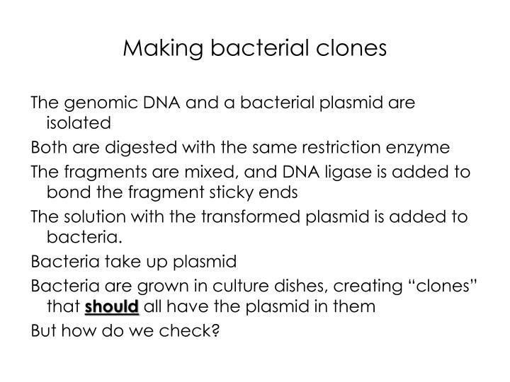 Making bacterial clones