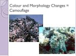 colour and m orphology c hanges camouflage