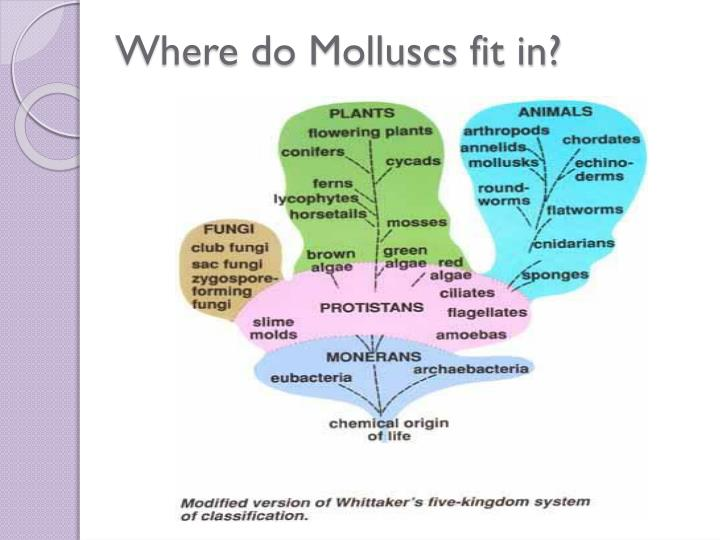 Where do Molluscs fit in?