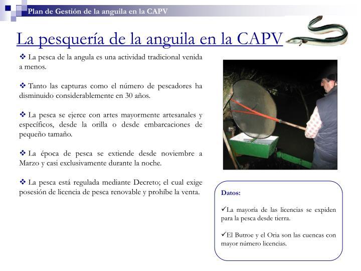 Plan de Gestión de la anguila en la CAPV