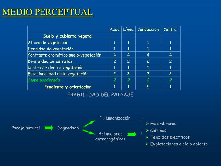 MEDIO PERCEPTUAL