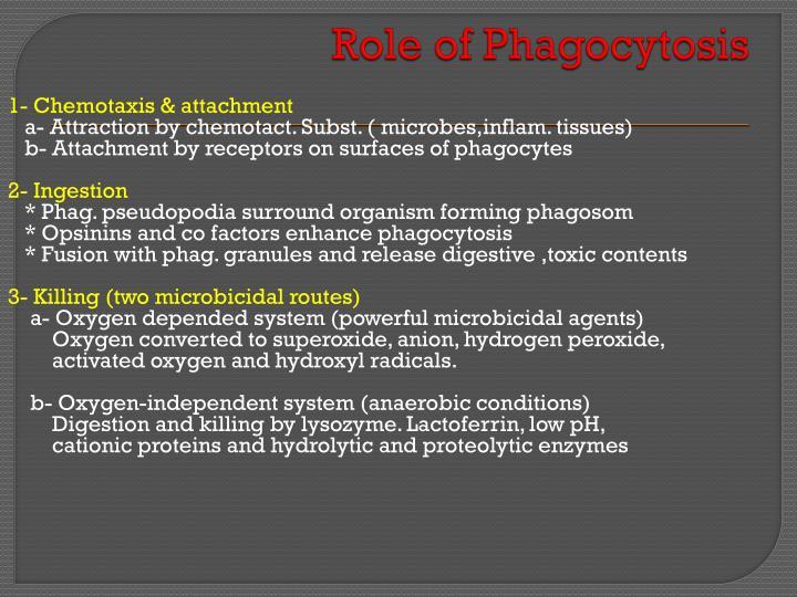 Role of Phagocytosis