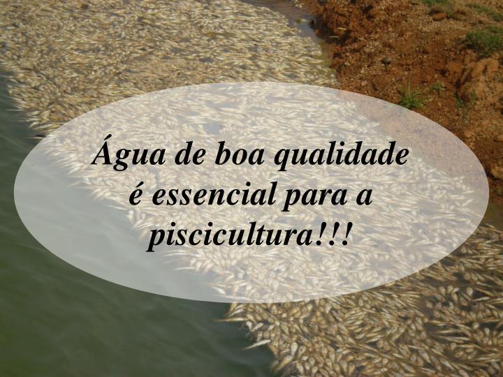 Água de boa qualidade é essencial para a piscicultura!!!
