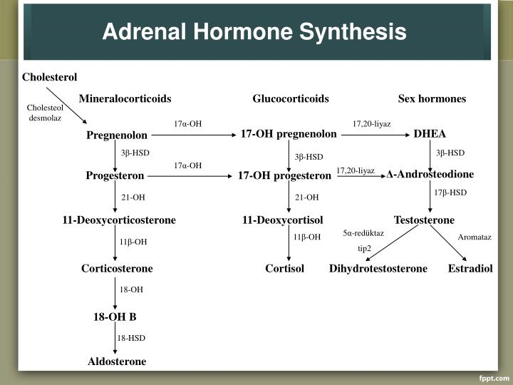 Adrenal Hormone Synthesis