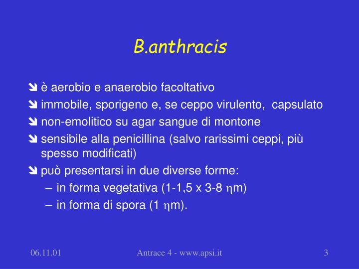 B.anthracis