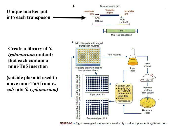 Unique marker put into each transposon
