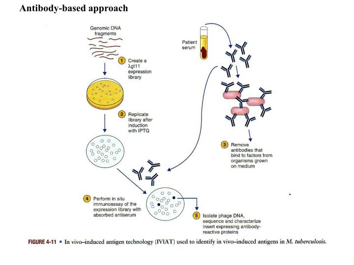 Antibody-based approach