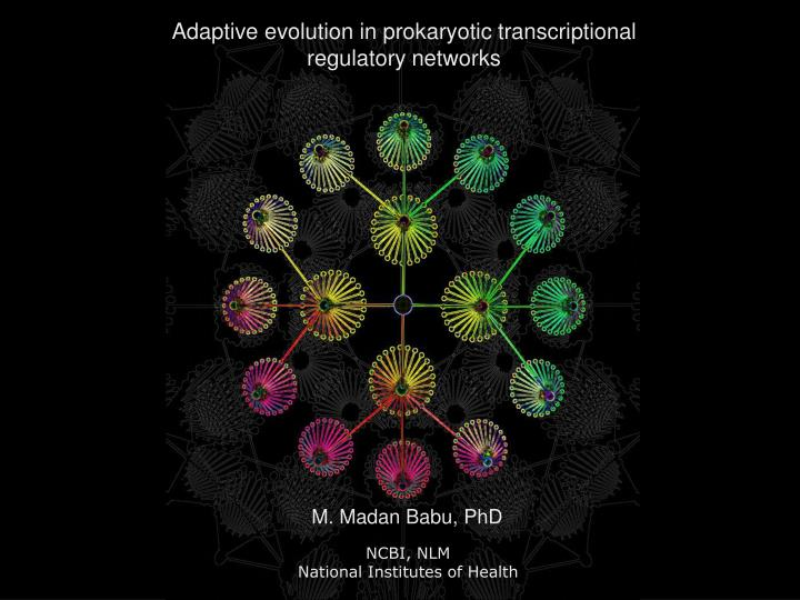 Adaptive evolution in prokaryotic transcriptional