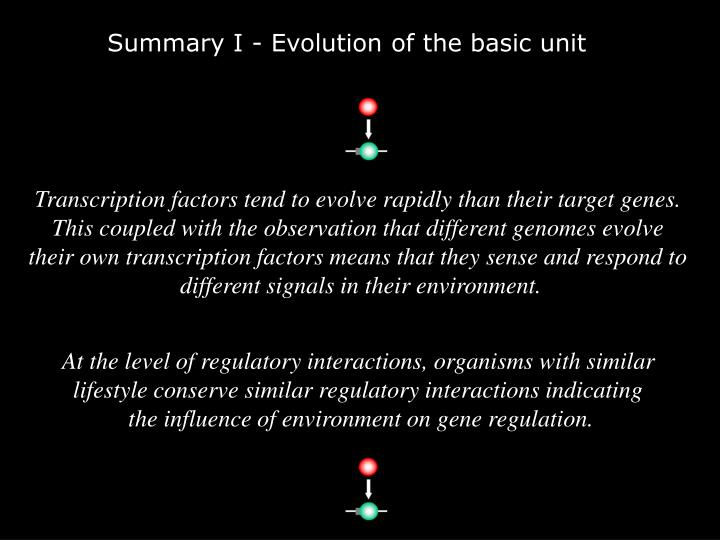 Summary I - Evolution of the basic unit