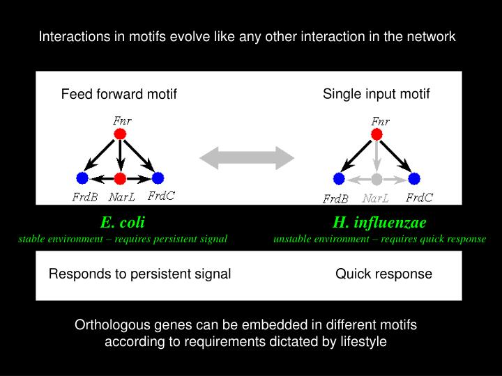 Interactions in motifs evolve like any other interaction in the network