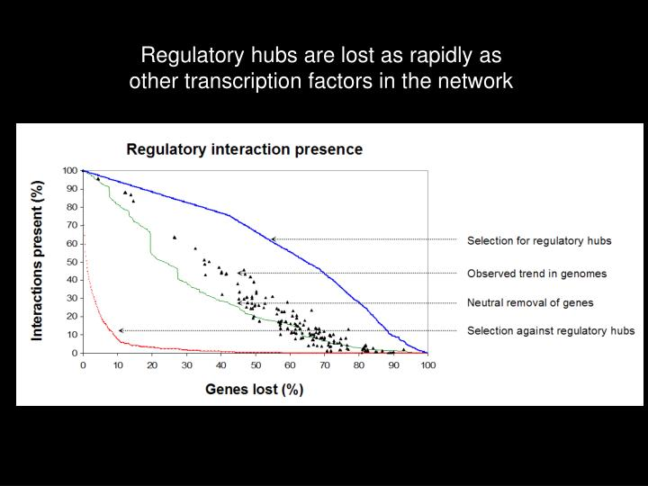 Regulatory hubs are lost as rapidly as