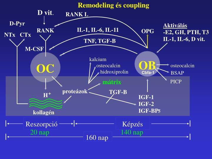 Remodeling és coupling