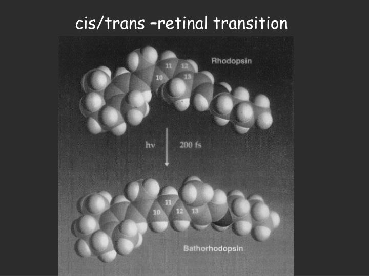 cis/trans –retinal transition