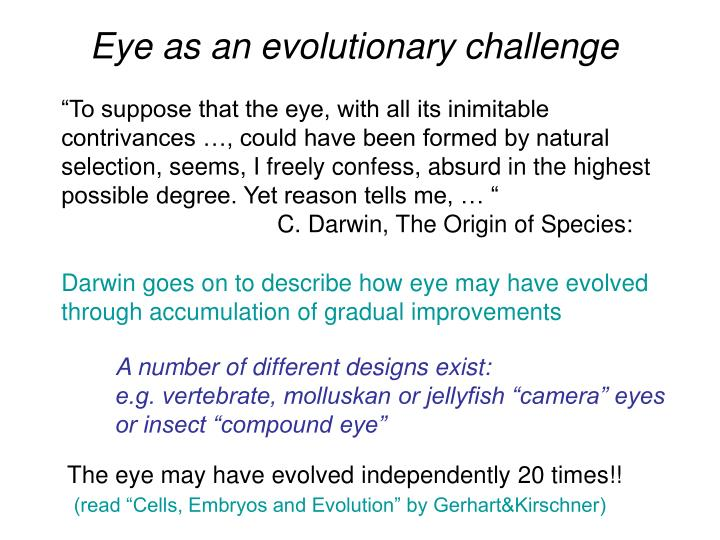 Eye as an evolutionary challenge