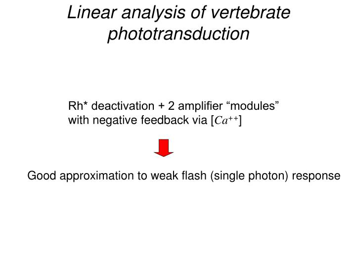 Linear analysis of vertebrate phototransduction