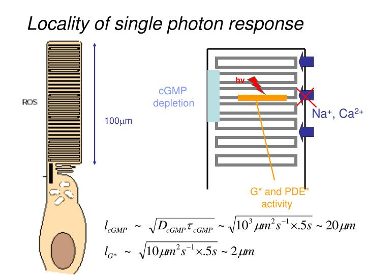 Locality of single photon response