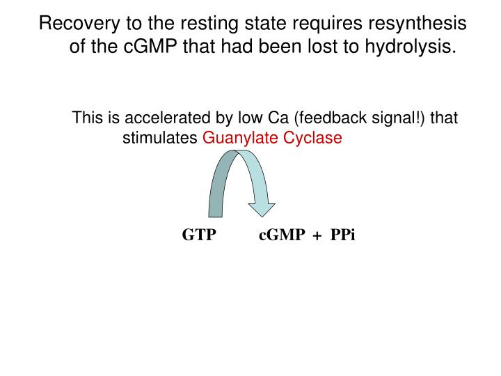 Recovery to the resting state requires resynthesis