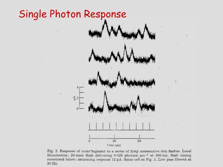 Single Photon Response