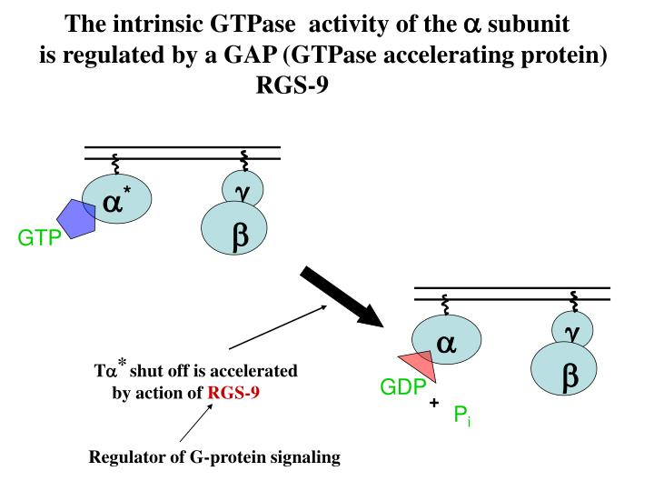 The intrinsic GTPase  activity of the