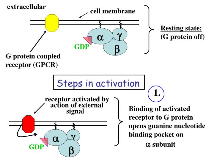 Steps in activation