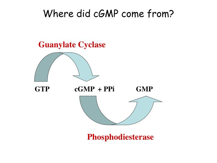 Where did cGMP come from?