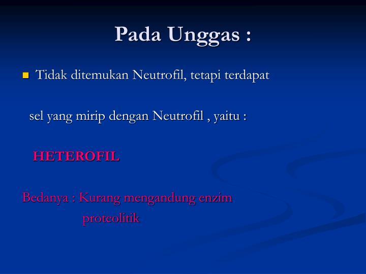 Pada Unggas :