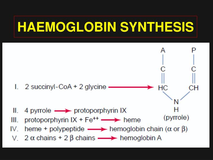 HAEMOGLOBIN SYNTHESIS
