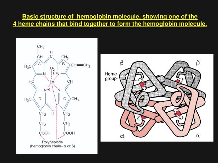 Basic structure of  hemoglobin molecule, showing one of the