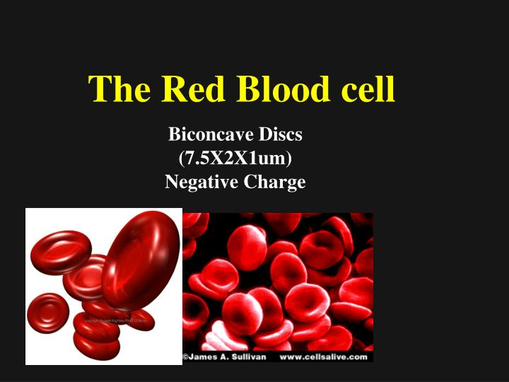 The Red Blood cell