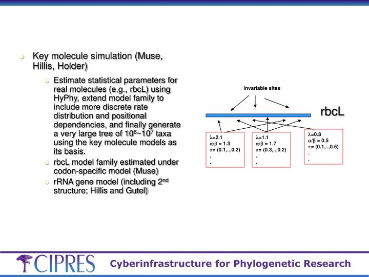 Key molecule simulation (Muse, Hillis, Holder)