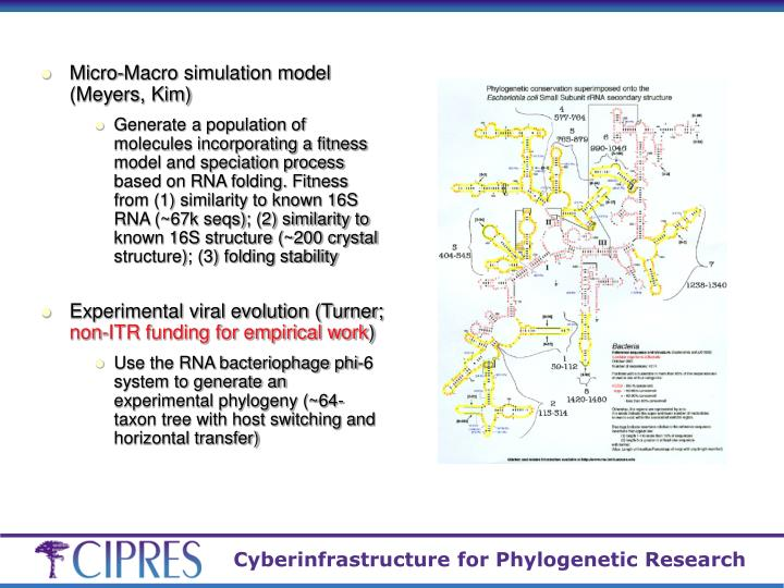 Micro-Macro simulation model (Meyers, Kim)