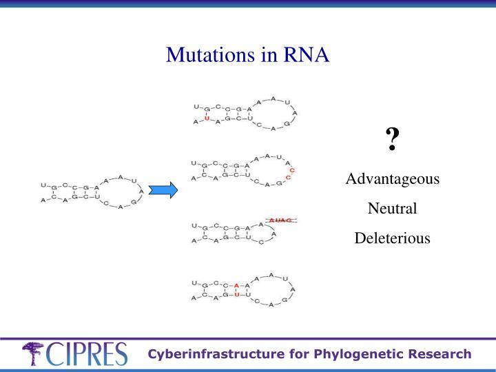 Mutations in RNA