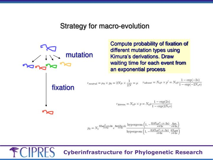 Strategy for macro-evolution