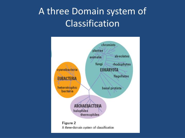 A three Domain system of Classification