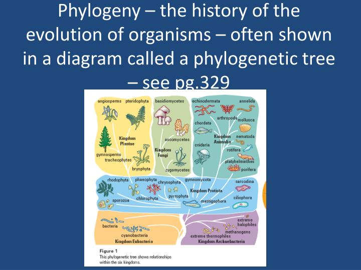 Phylogeny – the history of the evolution of organisms – often shown in a diagram called a