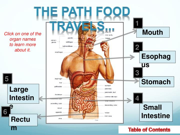 The path food travels...